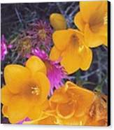 Floral Wonder Canvas Print by Robert Bray