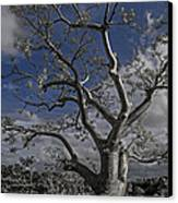 Ghost Tree Canvas Print