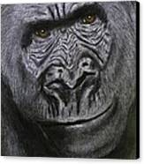 Gorilla Portrait Canvas Print by David Hawkes