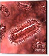 Group Of Escherichia Coli Bacteria Canvas Print by Stocktrek Images