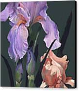 Iris Study Canvas Print