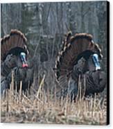 Jake Eastern Wild Turkeys Canvas Print by Linda Freshwaters Arndt