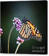 Monarch Butterfly Canvas Print by Elena Elisseeva