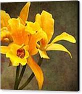 Orange Spotted Lip Cattleya Orchid Canvas Print by Rudy Umans