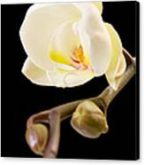 Orchid Canvas Print by Ilze Lucero