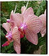 Orchid No.7 Canvas Print by Gregory Young