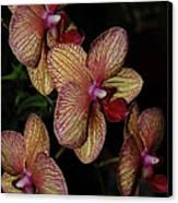 Orchid Quad Canvas Print