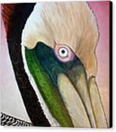 Pelican Peeking Canvas Print