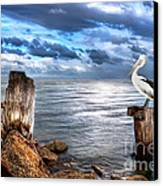 Pelican's Pride Canvas Print by Shannon Rogers