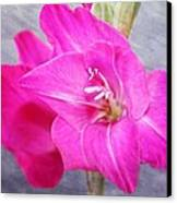 Pink Gladiola Canvas Print by Cathie Tyler