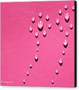 Pink Water Flower Canvas Print by Kip Krause