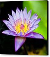 Purple Lotus  Canvas Print by Raimond Klavins
