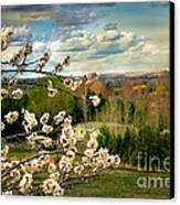 Spring Time Canvas Print by Robert Bales