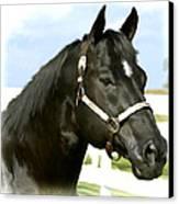 Stallion Canvas Print by Paul Tagliamonte