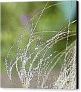 Summer Grass Canvas Print
