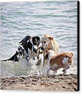 Three Dogs Playing On Beach Canvas Print