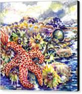 Tidal Pool I Canvas Print
