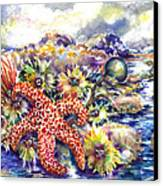 Tidal Pool I Canvas Print by Ann  Nicholson