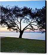Tree By The Bay Canvas Print by Kelley King