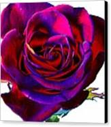 Velvet Rose Canvas Print