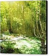 Waterfall In Rainforest Canvas Print