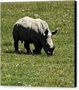 White Rhinoceros Calf  Canvas Print