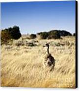Wild Emu Canvas Print by Tim Hester