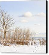Winter Shore Of Lake Ontario Canvas Print by Elena Elisseeva