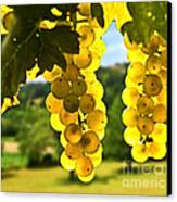 Yellow Grapes Canvas Print
