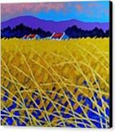 Yellow Meadow Canvas Print by John  Nolan