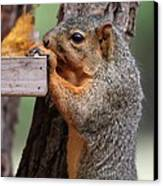 Eastern Fox Squirrel Canvas Print