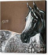 Arabian Horse Canvas Print by Angel  Tarantella