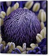 Anemone Canvas Print by Mark Johnson