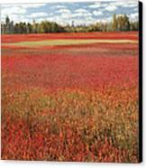 Autumn Blueberry Field Maine Canvas Print by Scott Leslie