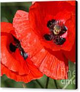 Beautiful Poppies 2 Canvas Print by Carol Lynch