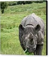Black Rhinoceros Diceros Bicornis Michaeli In Captivity Canvas Print by Matthew Gibson