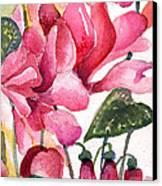 Cyclamen Canvas Print by Mindy Newman