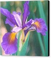 Exotic Iris Canvas Print