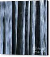 Forest Canvas Print by Bernard Jaubert