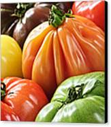 Heirloom Tomatoes Canvas Print by Elena Elisseeva