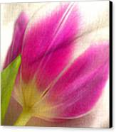 Linen Tulip Canvas Print by Bobbi Feasel