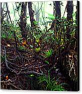 Misty Rainforest El Yunque Canvas Print by Thomas R Fletcher