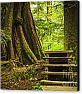 Path In Temperate Rainforest Canvas Print by Elena Elisseeva
