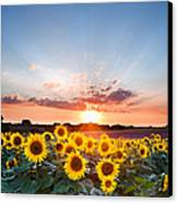 Sunflower Summer Sunset Landscape With Blue Skies Canvas Print