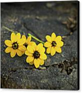 3 Yellow Flowers Canvas Print by Aged Pixel