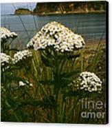 Sunset Bay State Park Canvas Print