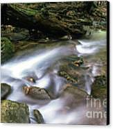 Cranberry Wilderness Canvas Print by Thomas R Fletcher