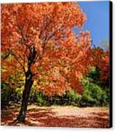 A Blanket Of Fall Colors Canvas Print by Amy Cicconi