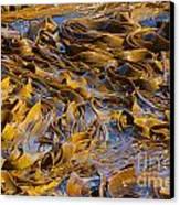 Bull Kelp Blades On Surface Background Texture Canvas Print