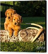 Golden Retriever Puppies Canvas Print